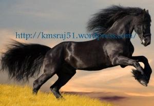 black_horse_running kmsraj51