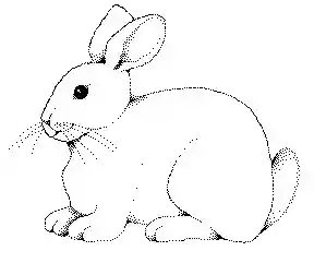rabbit-pictures-clip-art-hd-kmsraj51