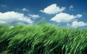 paysage bl?nuage 2