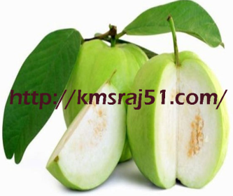 guava-kmsRAJ51