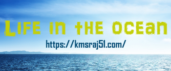 Life in the ocean-kmsraj51