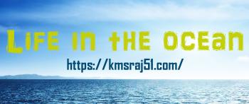 Life in the ocean-kmsraj51